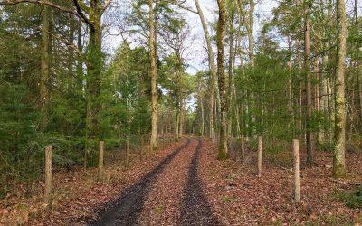 Visiter la sologne : les bons plans de Nicolas Vanier